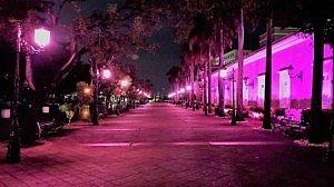 Paseo la princesa rosa
